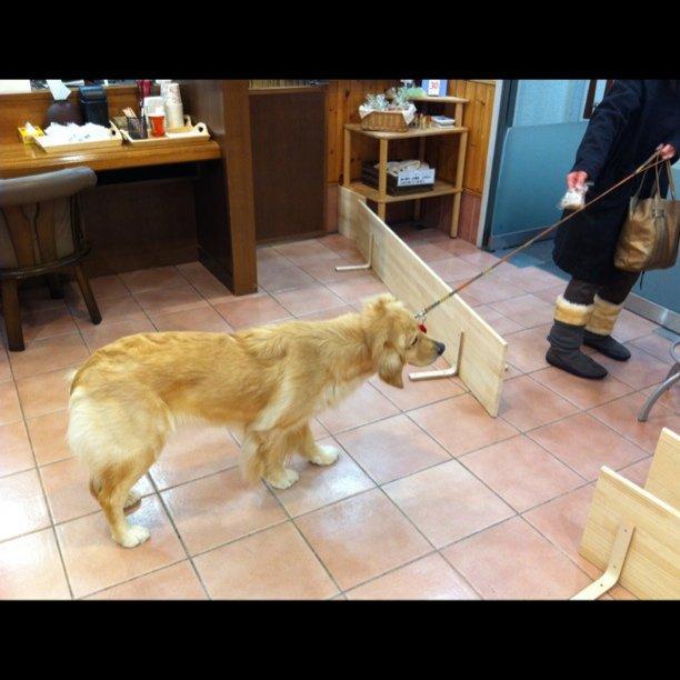 帰りたがらない,犬,画像,可愛すぎる,話題004