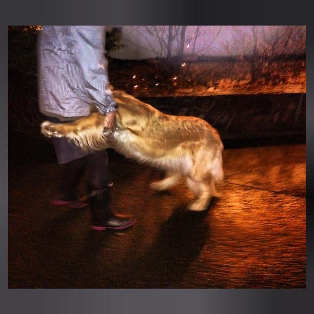 帰りたがらない,犬,画像,可愛すぎる,話題009