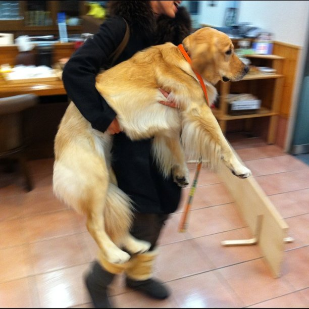 帰りたがらない,犬,画像,可愛すぎる,話題010