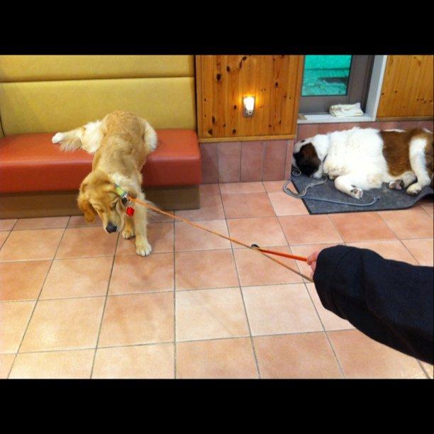 帰りたがらない,犬,画像,可愛すぎる,話題012