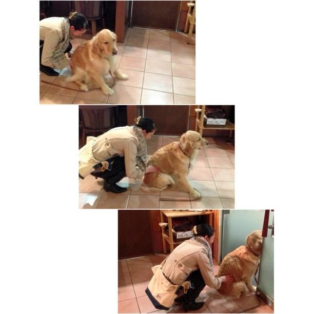 帰りたがらない,犬,画像,可愛すぎる,話題014
