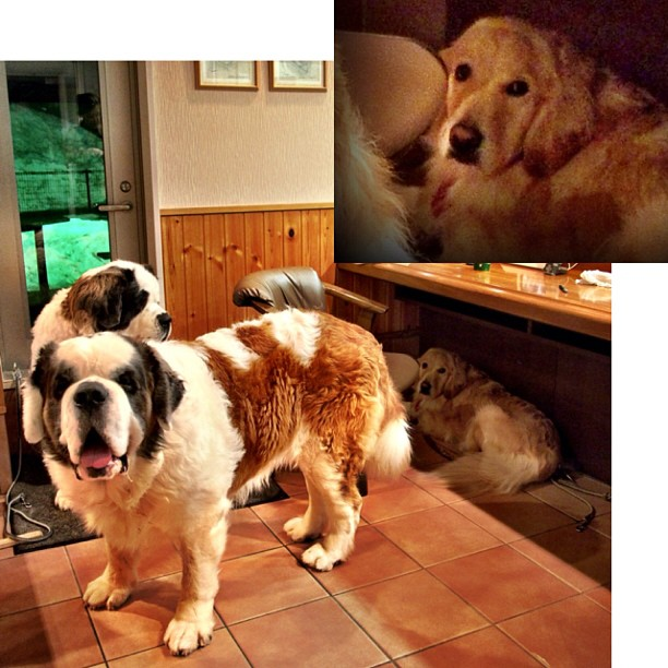 帰りたがらない,犬,画像,可愛すぎる,話題016
