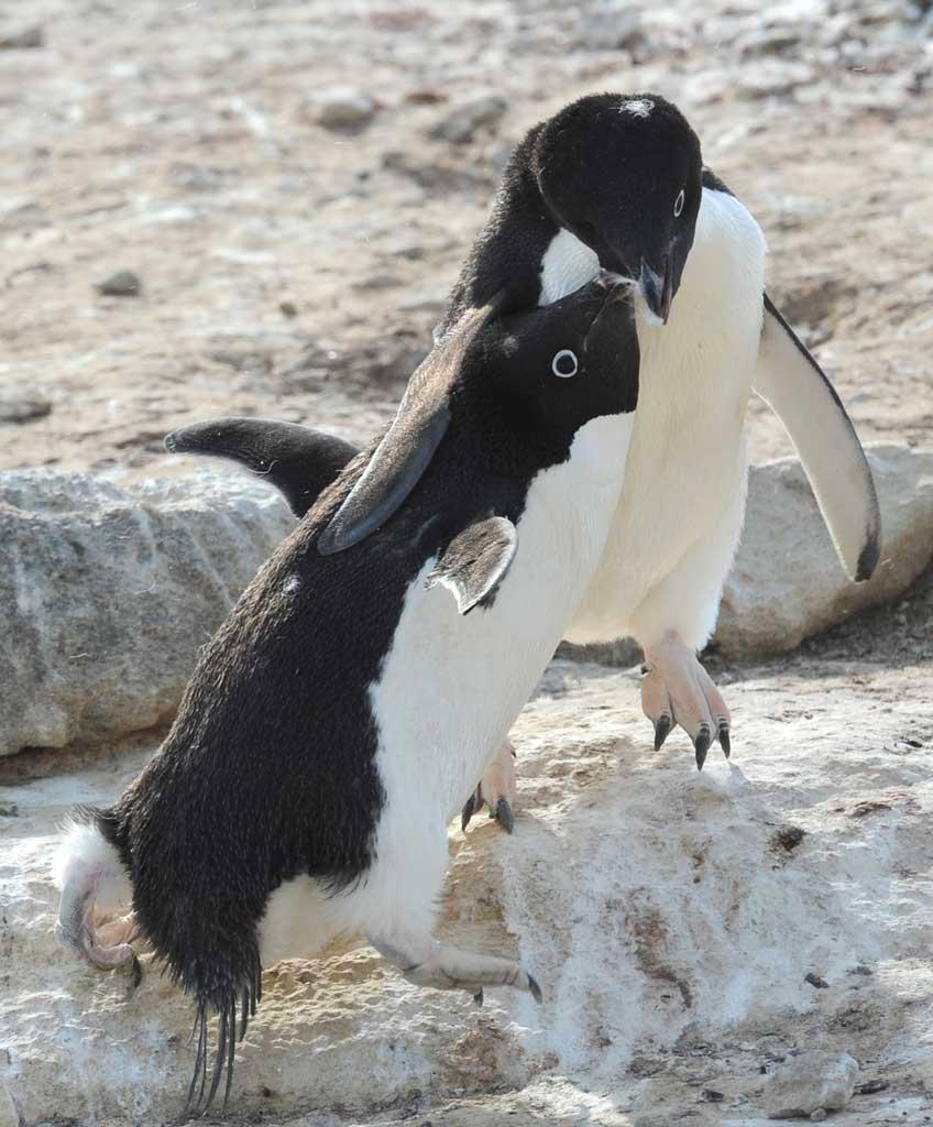 激おこぷんぷん丸,ペンギン,画像,まとめ001