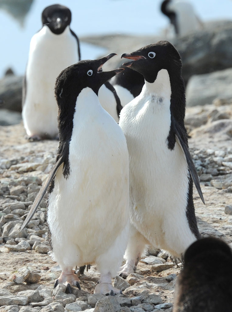 激おこぷんぷん丸,ペンギン,画像,まとめ004