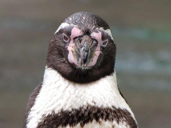 激おこぷんぷん丸,ペンギン,画像,まとめ005