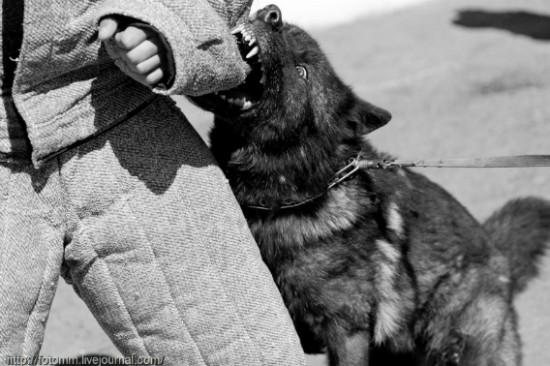 オオカミ,画像,まとめ006