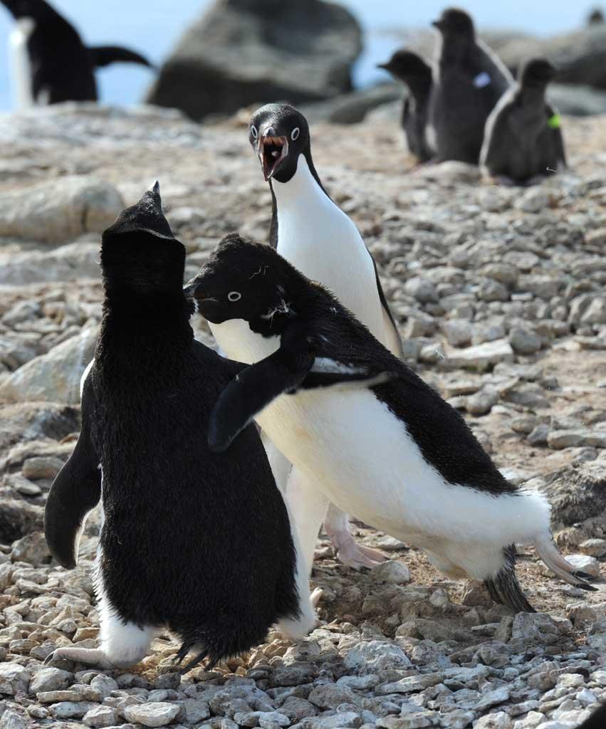 激おこぷんぷん丸,ペンギン,画像,まとめ006
