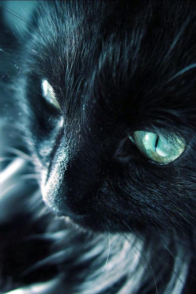 可愛い,猫,スマホ,壁紙,画像,まとめ007
