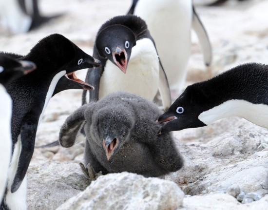 激おこぷんぷん丸,ペンギン,画像,まとめ007