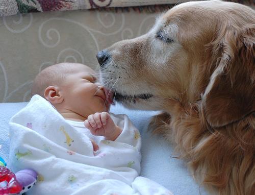 動物,赤ちゃん,ほっこり,画像,まとめ007