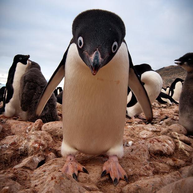 激おこぷんぷん丸,ペンギン,画像,まとめ008