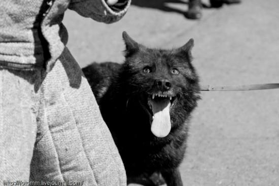 オオカミ,画像,まとめ009