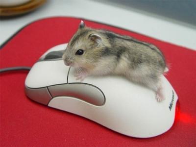 マウスとハムスターがかわいい