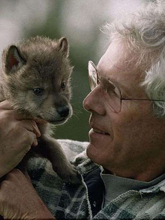 オオカミ,画像,まとめ012