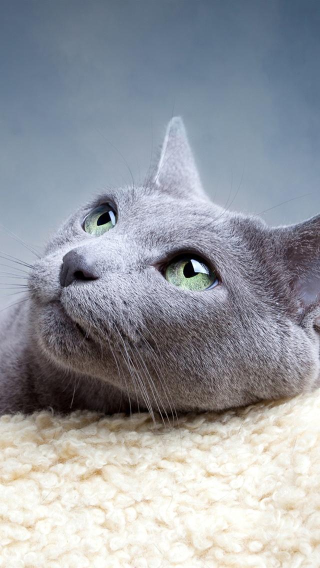 可愛い,猫,スマホ,壁紙,画像,まとめ013
