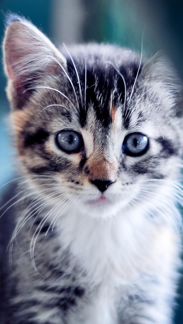 可愛い,猫,スマホ,壁紙,画像,まとめ015