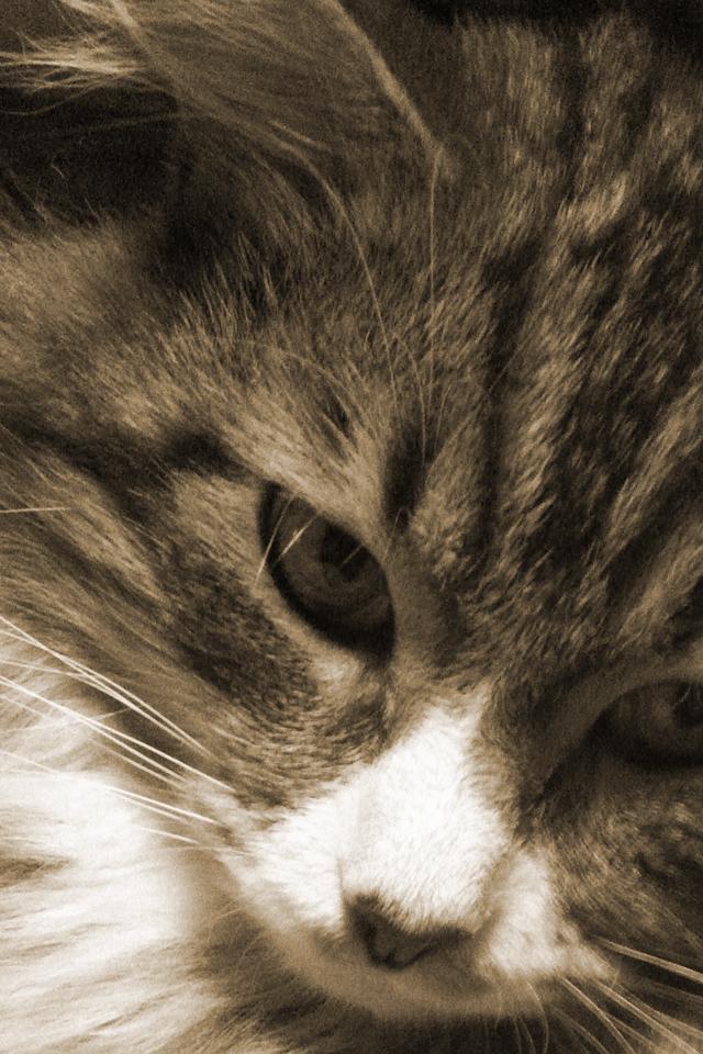 可愛い,猫,スマホ,壁紙,画像,まとめ016