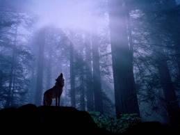 オオカミ,画像,まとめ016