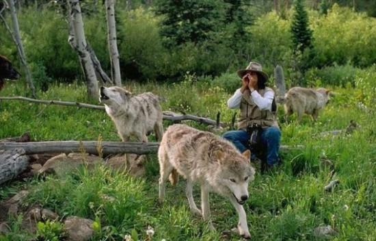 オオカミ,画像,まとめ023