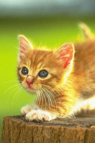 可愛い,猫,スマホ,壁紙,画像,まとめ029