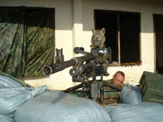猫,軍人,癒し,画像,まとめ029