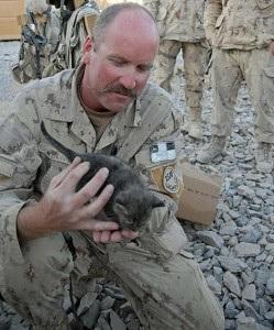 猫,軍人,癒し,画像,まとめ033