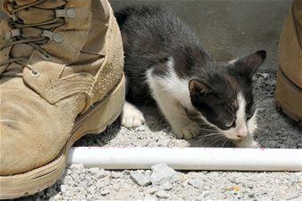 猫,軍人,癒し,画像,まとめ042