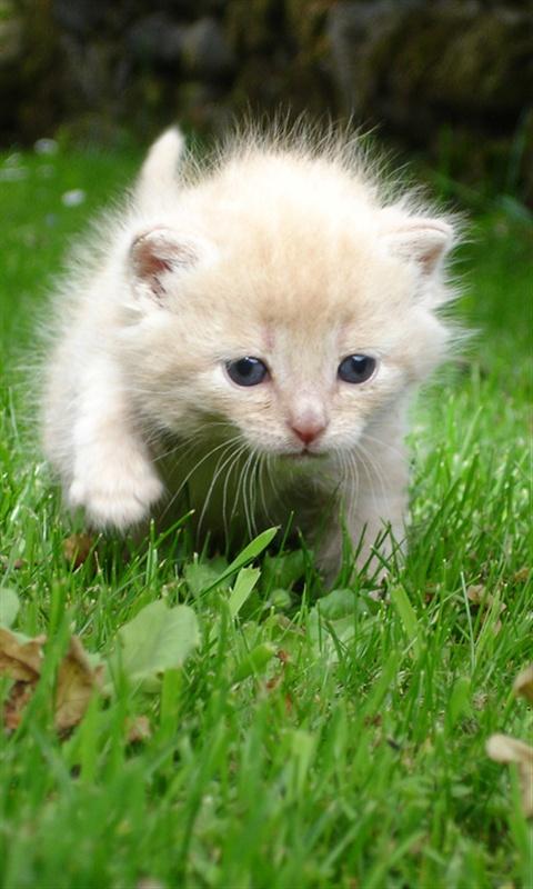 可愛い,猫,スマホ,壁紙,画像,まとめ044