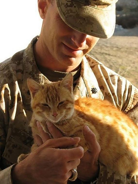 猫,軍人,癒し,画像,まとめ044