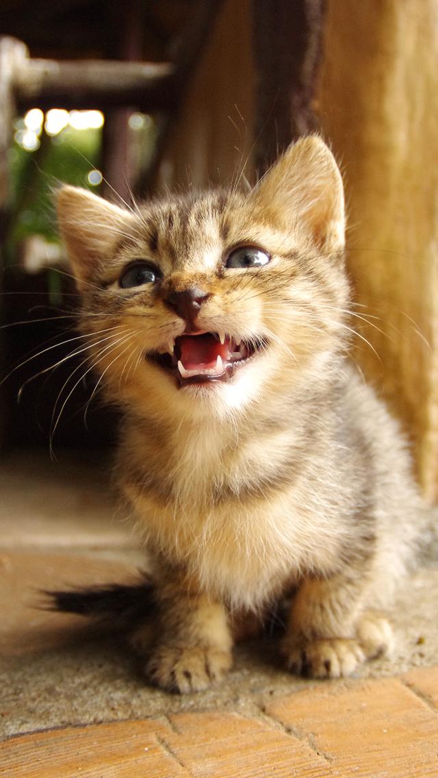 可愛い,猫,スマホ,壁紙,画像,まとめ046