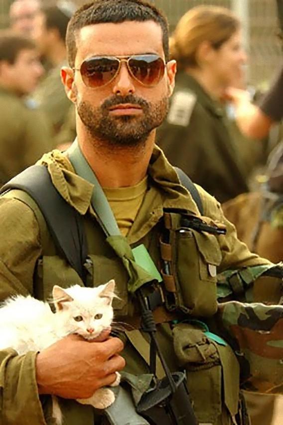 猫,軍人,癒し,画像,まとめ053