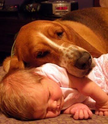 動物,赤ちゃん,ほっこり,画像,まとめ056