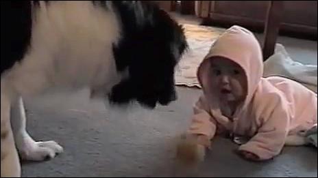 動物,赤ちゃん,ほっこり,画像,まとめ068