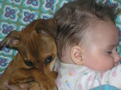 動物,赤ちゃん,ほっこり,画像,まとめ074