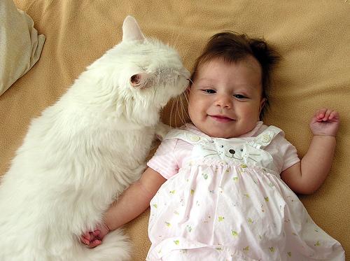 赤ちゃん,戯れる,犬,猫,画像,まとめ001