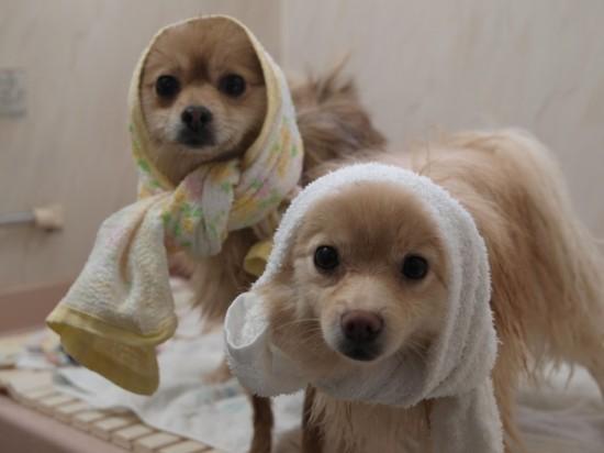 お風呂,大好き,ペット画像,まとめ002