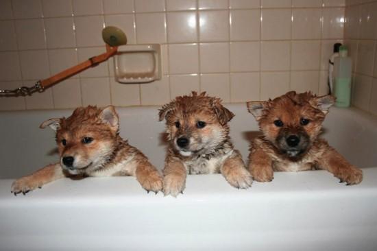 お風呂,大好き,ペット画像,まとめ003