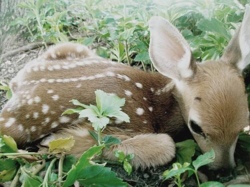 可愛すぎる,動物,赤ちゃん,画像,まとめ003
