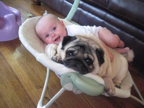 赤ちゃん,戯れる,犬,猫,画像,まとめ007