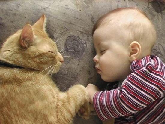 赤ちゃん,戯れる,犬,猫,画像,まとめ008