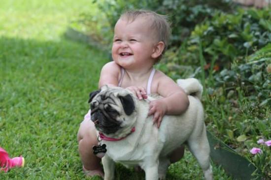 赤ちゃん,戯れる,犬,猫,画像,まとめ009