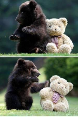 可愛すぎる,動物,赤ちゃん,画像,まとめ010