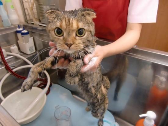 お風呂,大好き,ペット画像,まとめ012