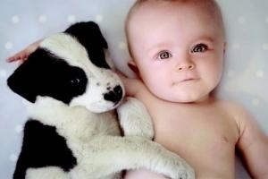赤ちゃん,戯れる,犬,猫,画像,まとめ013