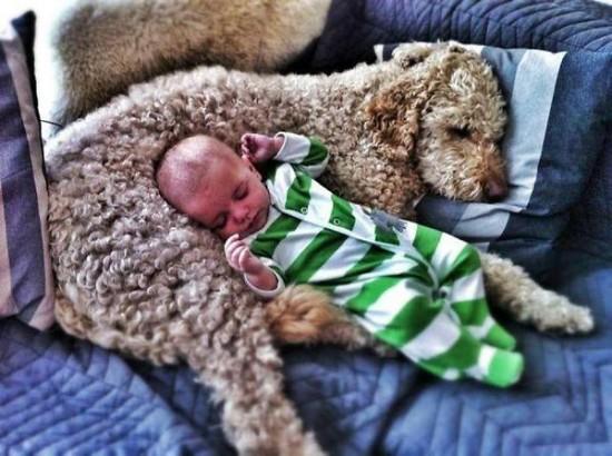 赤ちゃん,戯れる,犬,猫,画像,まとめ014