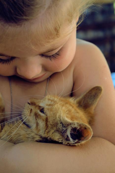 赤ちゃん,戯れる,犬,猫,画像,まとめ017