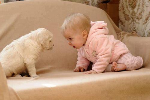 赤ちゃん,戯れる,犬,猫,画像,まとめ018
