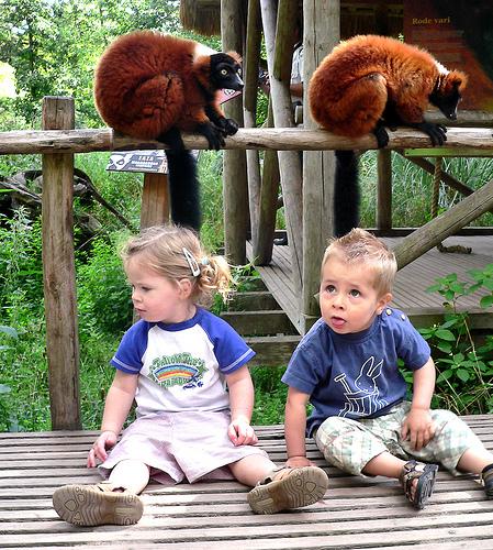 子供,大好き,動物,画像,まとめ019