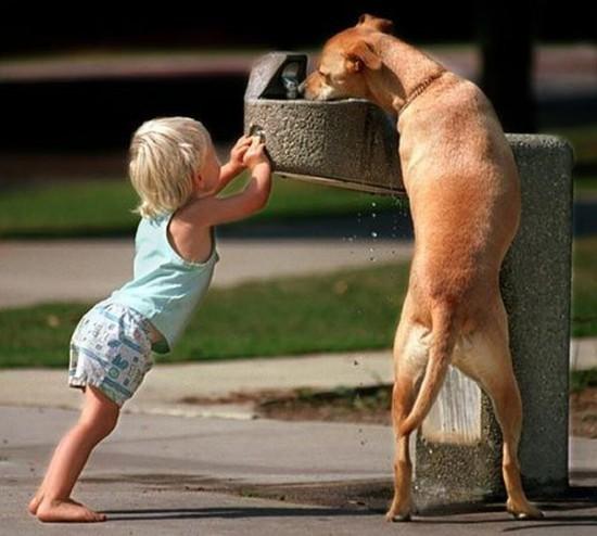 子供,大好き,動物,画像,まとめ020