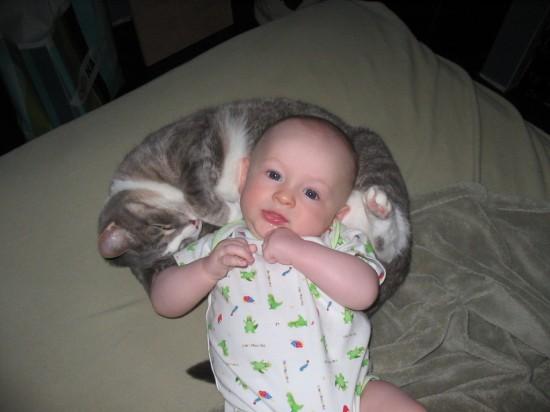 赤ちゃん,戯れる,犬,猫,画像,まとめ024